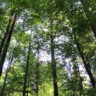 03_Wald